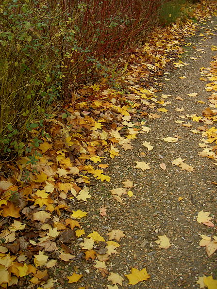 Cambridge Science Park: Leaves on path